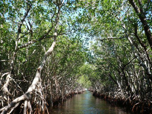 mangroves everglades bogs