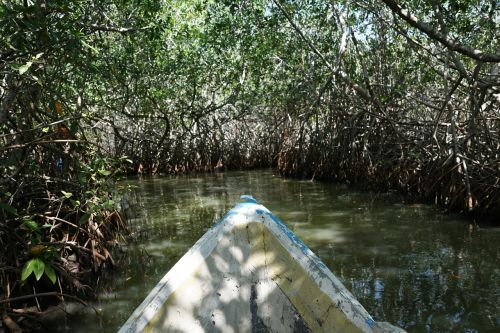 mangroves forest colombia