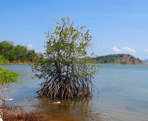 mangroves tidal forest creek