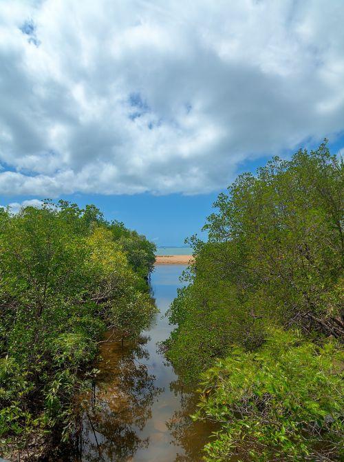 mangroves creek beach