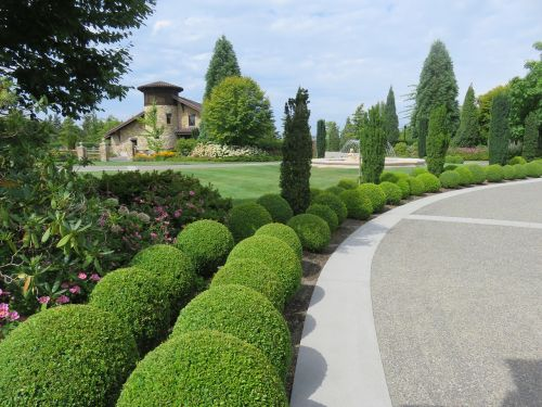 manicured trees greenery