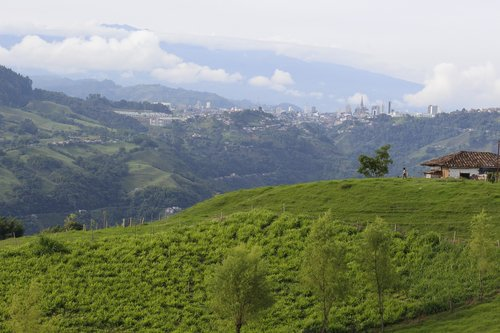 manizales  colombia  coffee