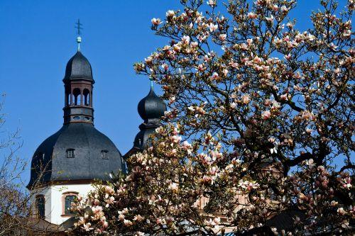 mannheim spire magnolia blossom