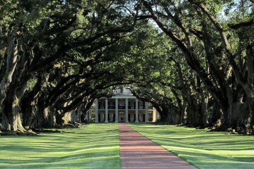 mansion alley oaks