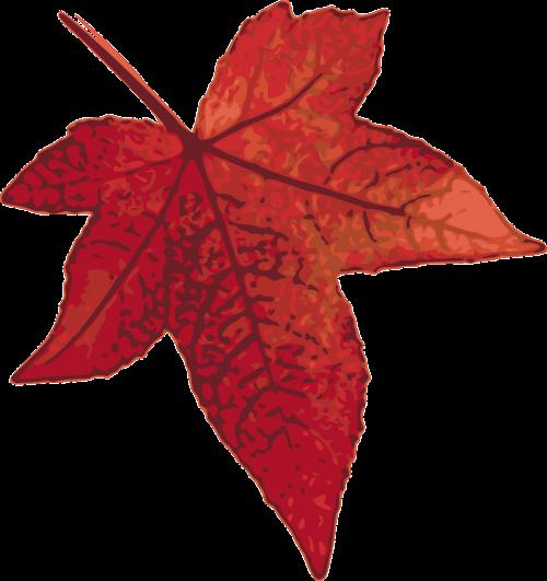 klevas,lapai,ruduo,kritimas,lapija,miškas,sodas,gamta,parkas,fotorealizmas,raudona,medis,nemokama vektorinė grafika