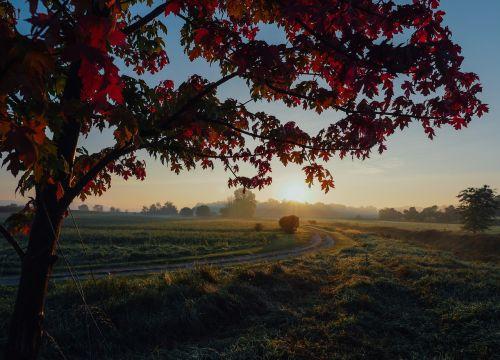 maple autumn season