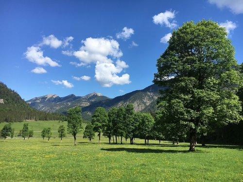 maple trees  austria  mountains