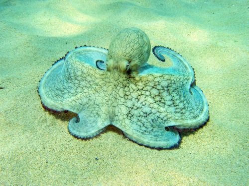 mar seafood molluscs