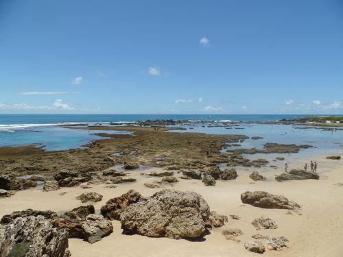 mar coral reef blue