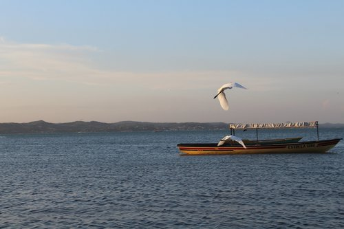 mar  paige  seagull