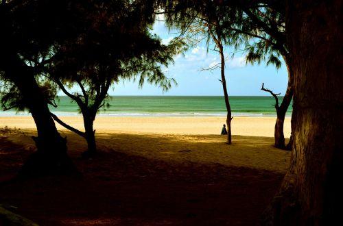 mar beach nature