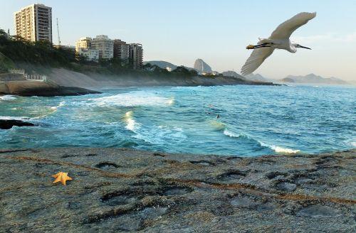 mar ocean beach