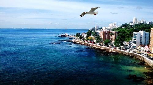 mar ocean seagull