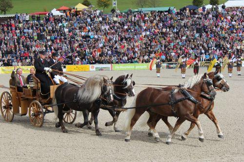 marbach horses stallion parade