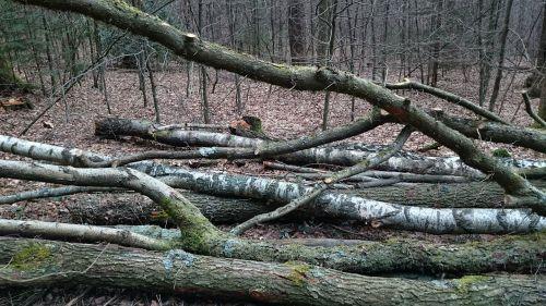Kovas,miškas,gamta