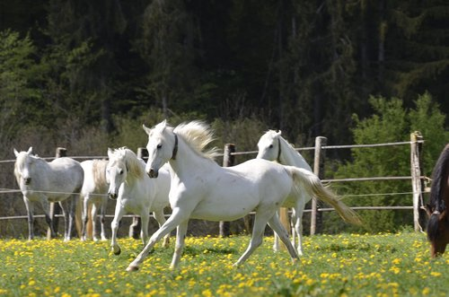 mare  main and state stud marbach  mare herd