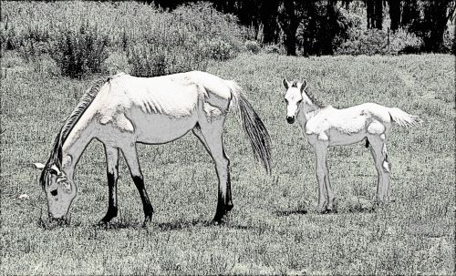 Mare And Foal Line Drawing