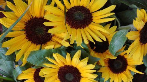 margaret flowers emotions