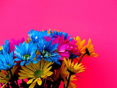 margaritas colors flowers