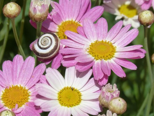 margaritas  flowers  flower