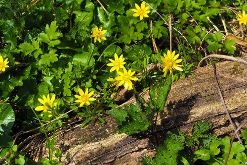 margarite flower flowers