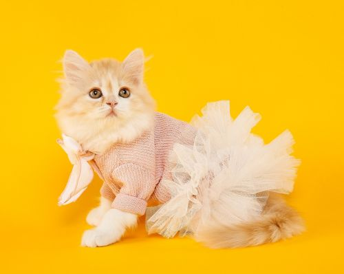 marie cat cute