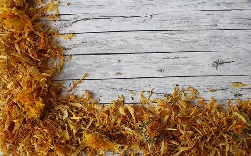 marigold  dry flower  trockenblume