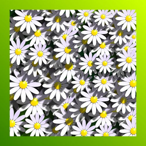marigolds daisies flowers