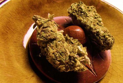 marijuana pot kind