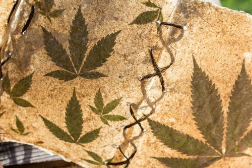marijuana cannabis book