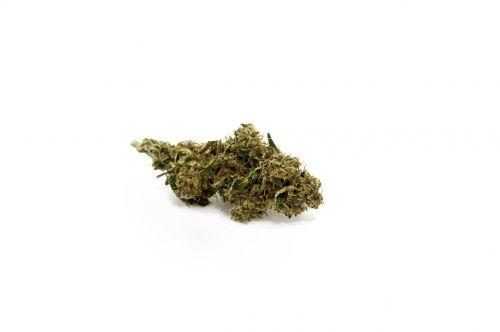 marijuana cannabis bud