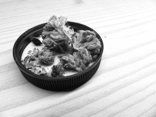 Marijuana Buds Black And White