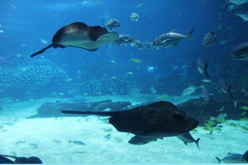 marine aquarium marine life fish