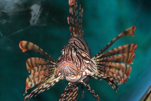 marine fish bizarre sorrow