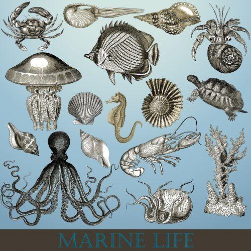 marine life marine sea life