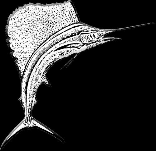 marlin fish  sword fish  game fishing