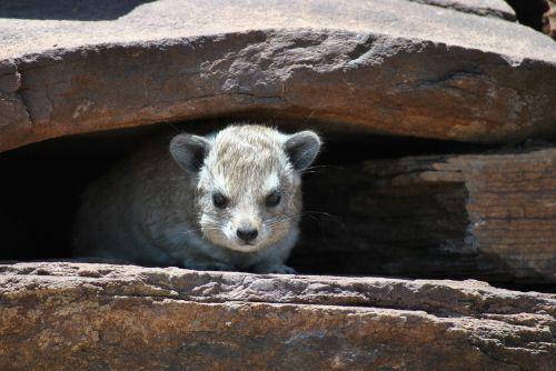 marmot stones cave