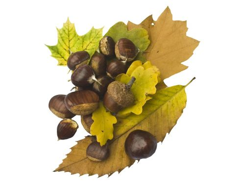 maroni sweet chestnuts fruits