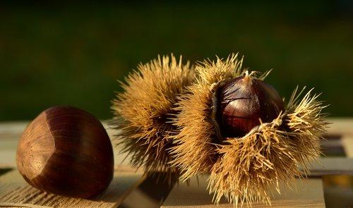 maroni  chestnut  autumn