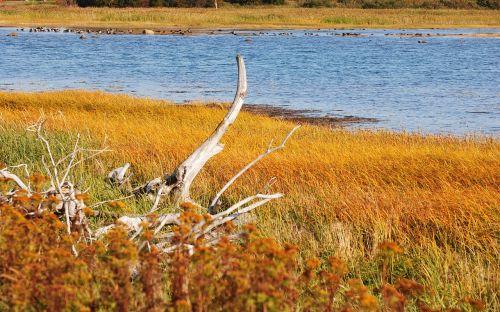 marsh vegetation fall