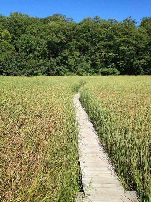 marsh boardwalk path