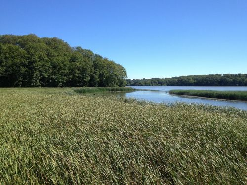 marsh lake summer