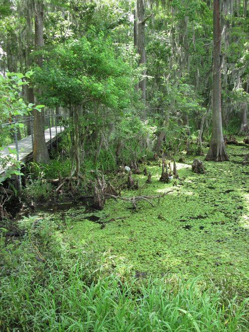 marsh swamp louisiana