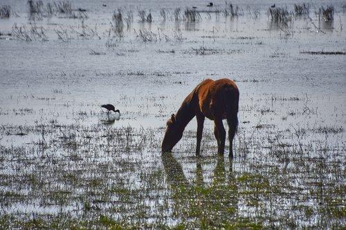 marsh  colt  ave