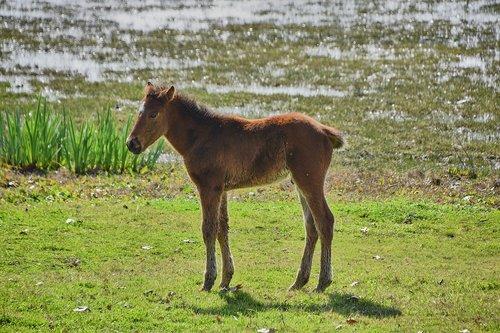 marsh  colt  water