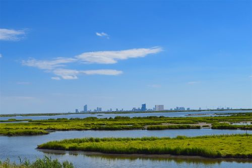 marshland estuary water