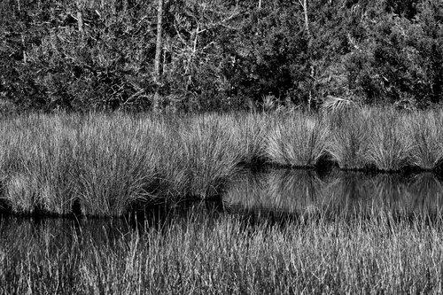 marshland  swamp  environment