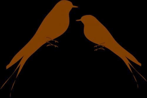 martins swallows birds