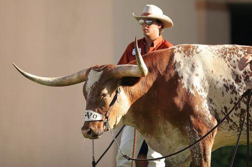 mascot sports texas