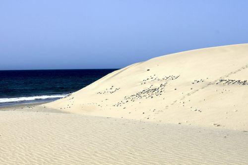 maspalomas gran canaria beach